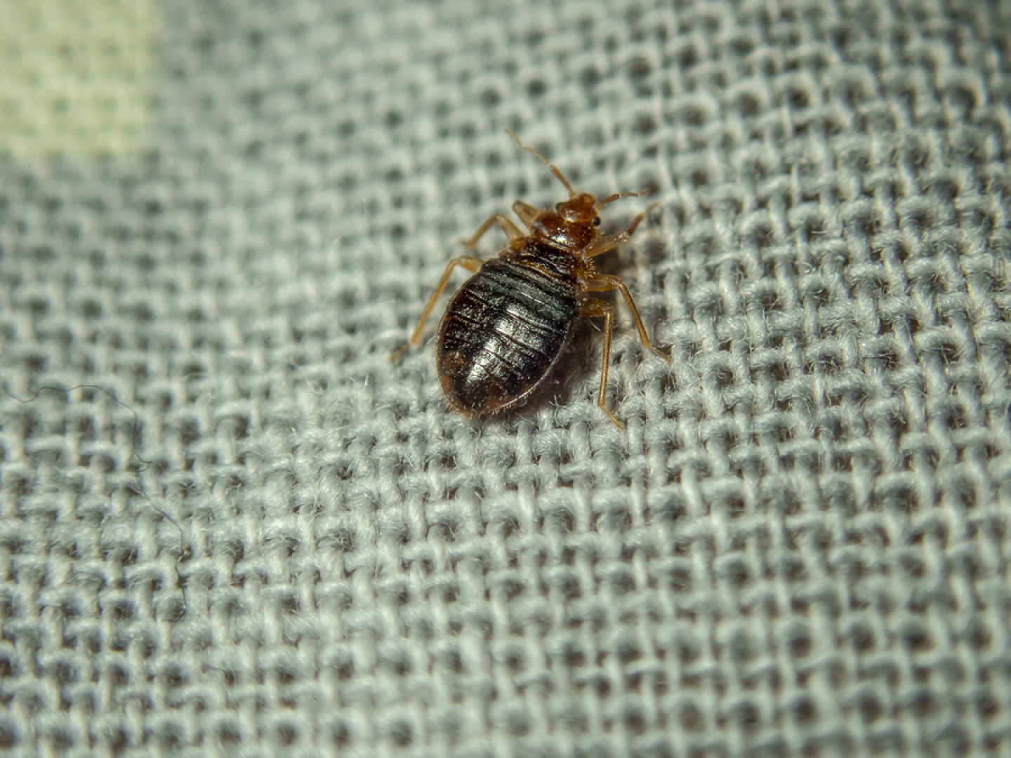 Are Bed Bugs Keeping You Up at Night?